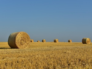 Более 230 тонн сена заготовили нижегородские фермеры