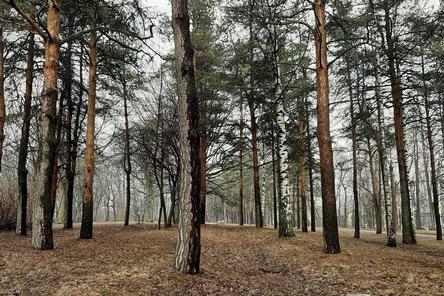Высадка деревьев в нижегородском парке «Швейцария» начнется в апреле