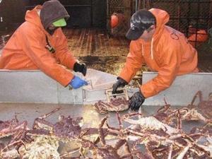 Варианты строительства судов для ловли крабов рассматривают на «Красном Сормове»