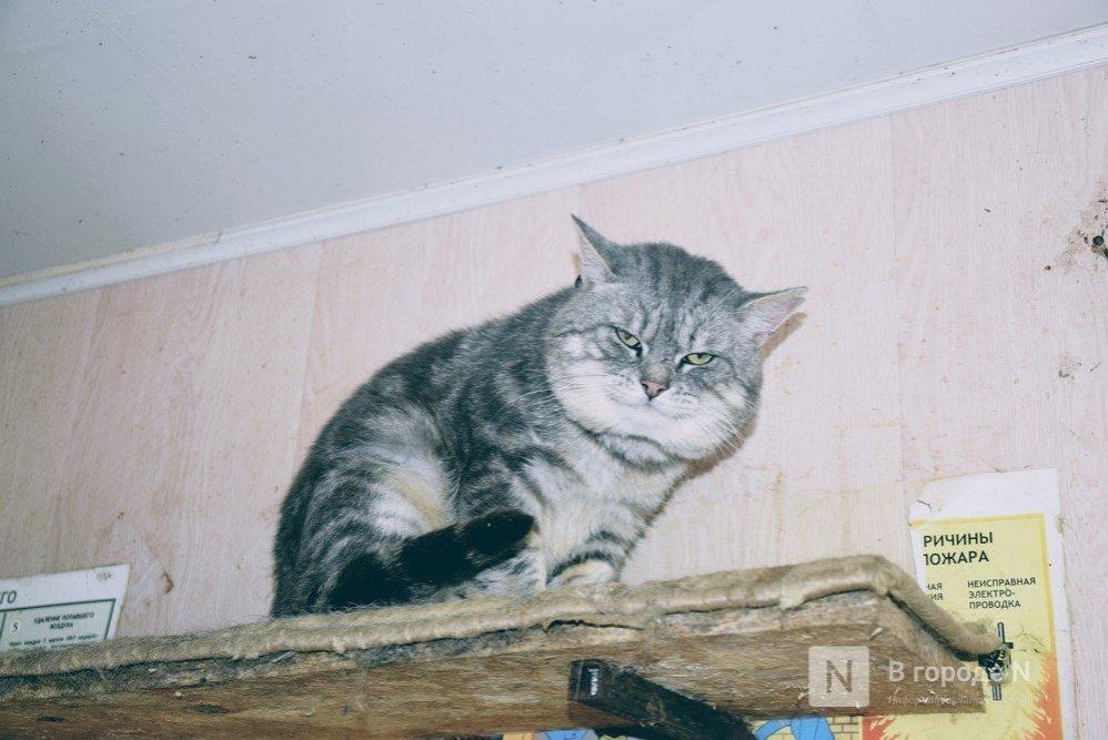 Собрать гостинцы для животных в приютах предлагают нижегородцам - фото 1