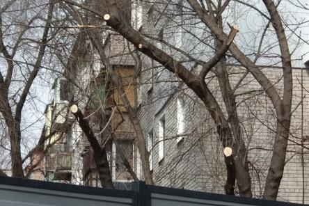 Застройщик гостиницы у Нижегородской ярмарки спилил деревья над стройплощадкой