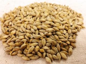 Двое бутурлинцев совершили крупную кражу зерна со склада сельхозпредприятия