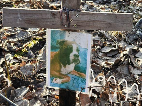 Православный крест над котом: где находится нижегородское кладбище домашних животных - фото 7