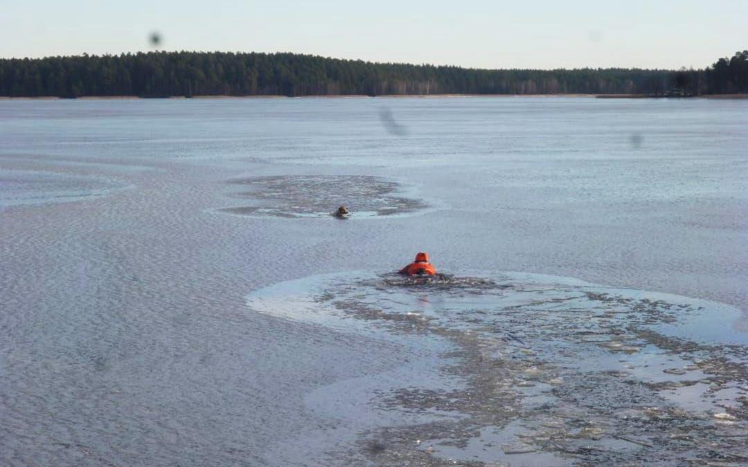 Провалившуюся под лед собаку спасли сотрудники МЧС в Выксе - фото 1