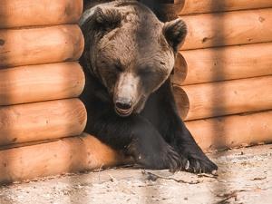 Медведи Миша и Маша из нижегородского «Мишутки» переехали в «Маленькую страну»