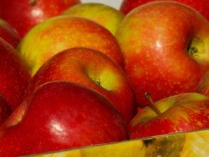 В Нижегородской области начало развиваться промышленное производство яблок