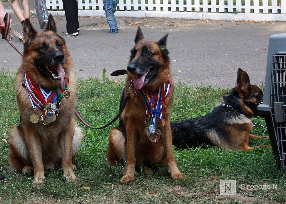 Площадки для собачьего спорта появится в парке «Швейцария» - фото 1