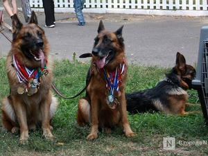 Площадки для собачьего спорта появятся в парке «Швейцария»