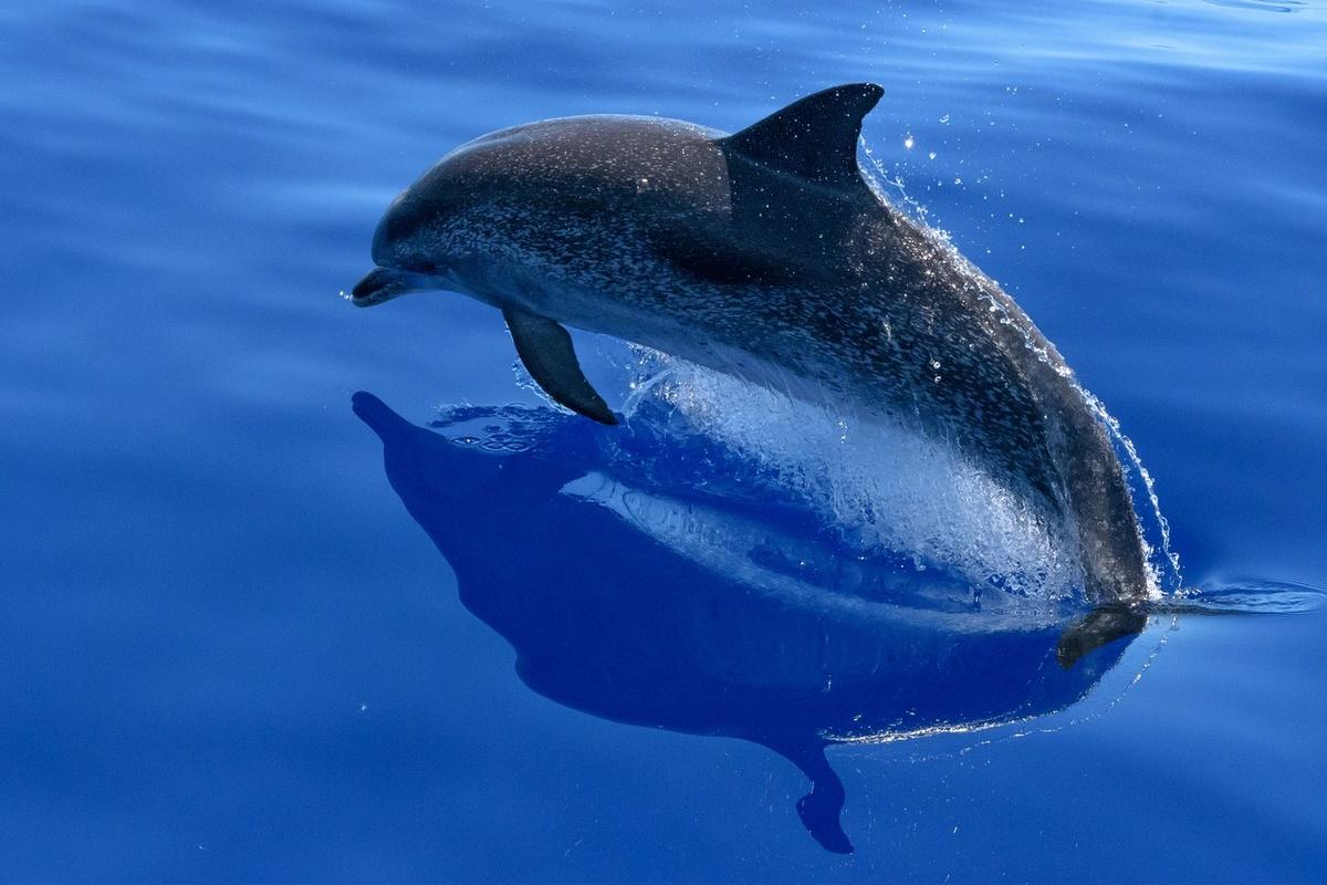 Стало известно, когда откроется нижегородский дельфинарий - фото 1