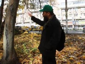 Подрядчик повредил деревья при благоустройстве парка Пушкина