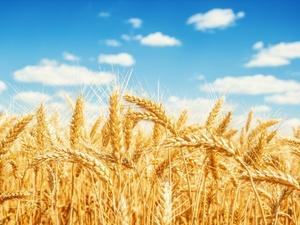 Выплата «Согласия» одному из предприятий стала крупнейшей на рынке сельхозстрахования