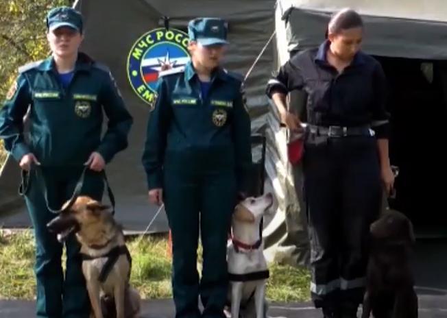 Четыре собаки поступят на службу в нижегородское управление МЧС - фото 1